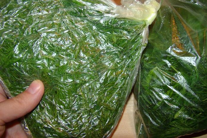 как хранить зелень в холодильнике