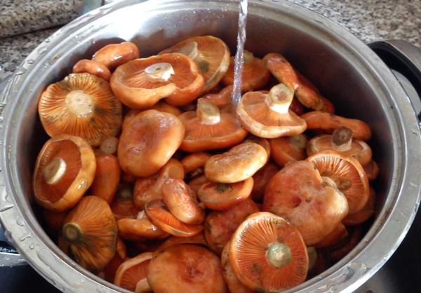 соленые рыжики холодным способом рецепт с фото
